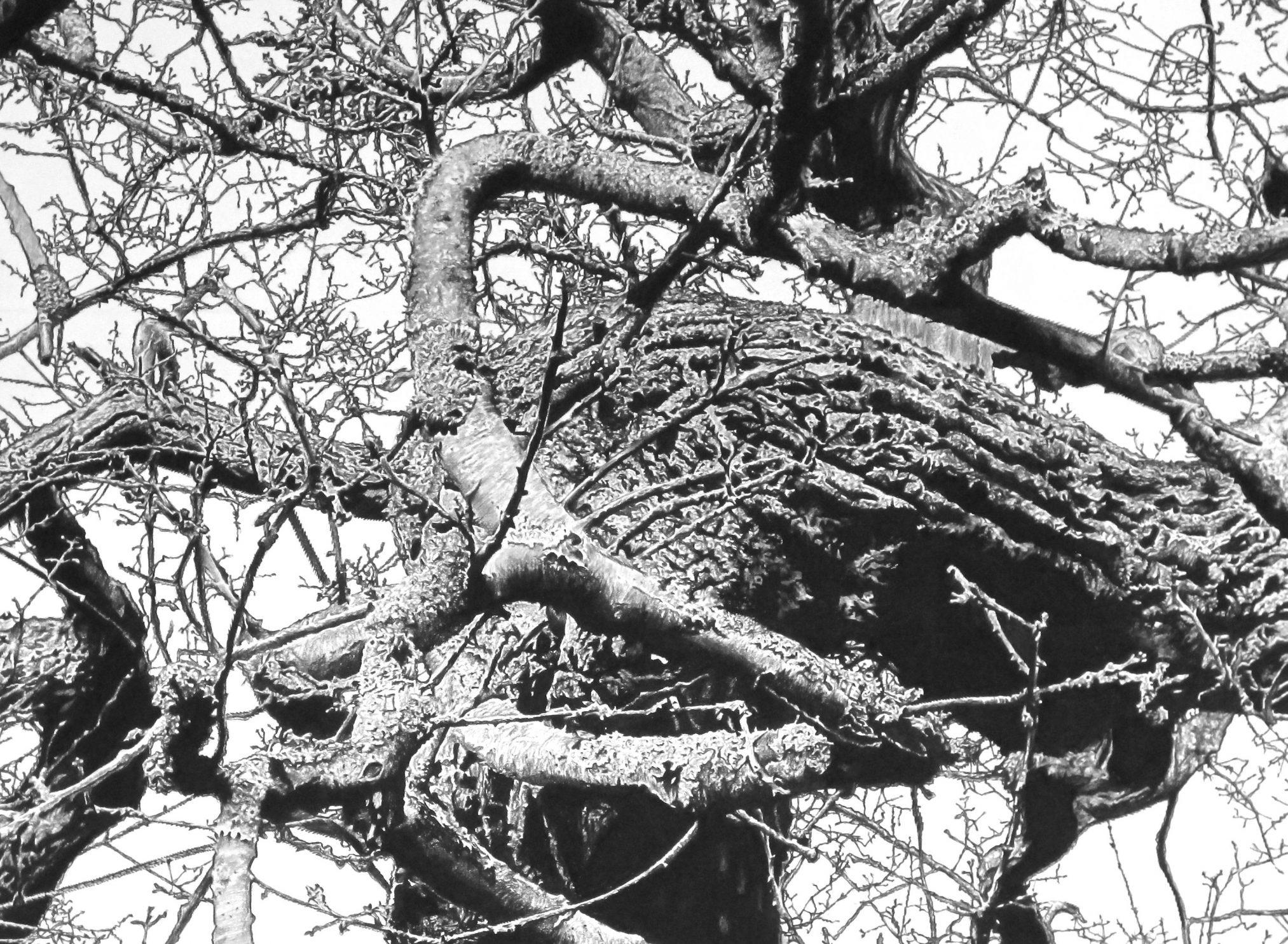 Kett's Oak 1