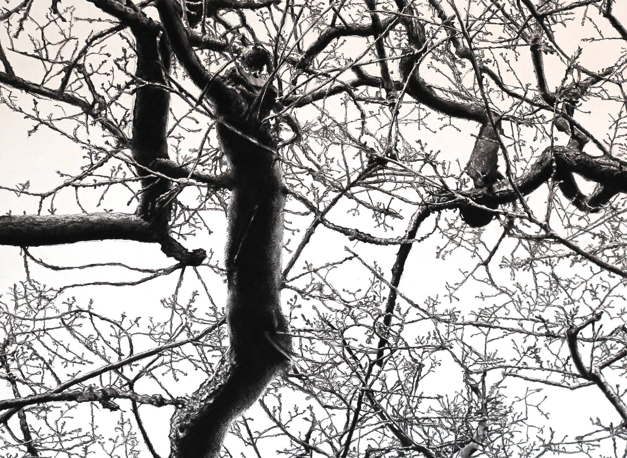 Kett's Oak 9