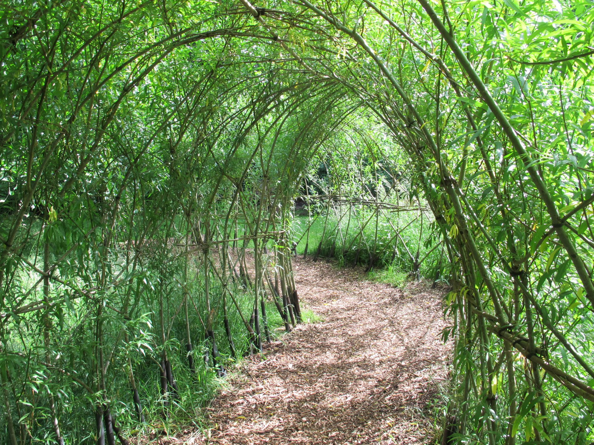 Living Willow Tunnel 3