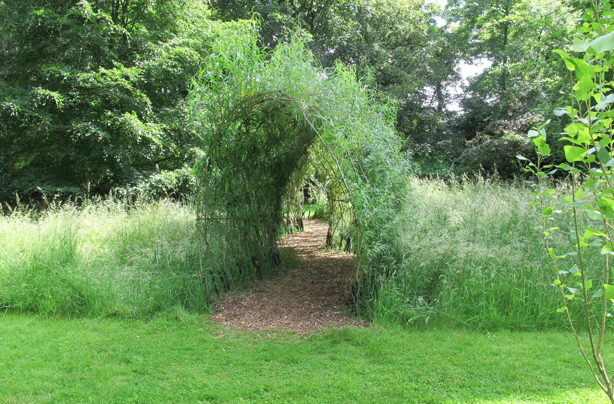 Living Willow Tunnel 5
