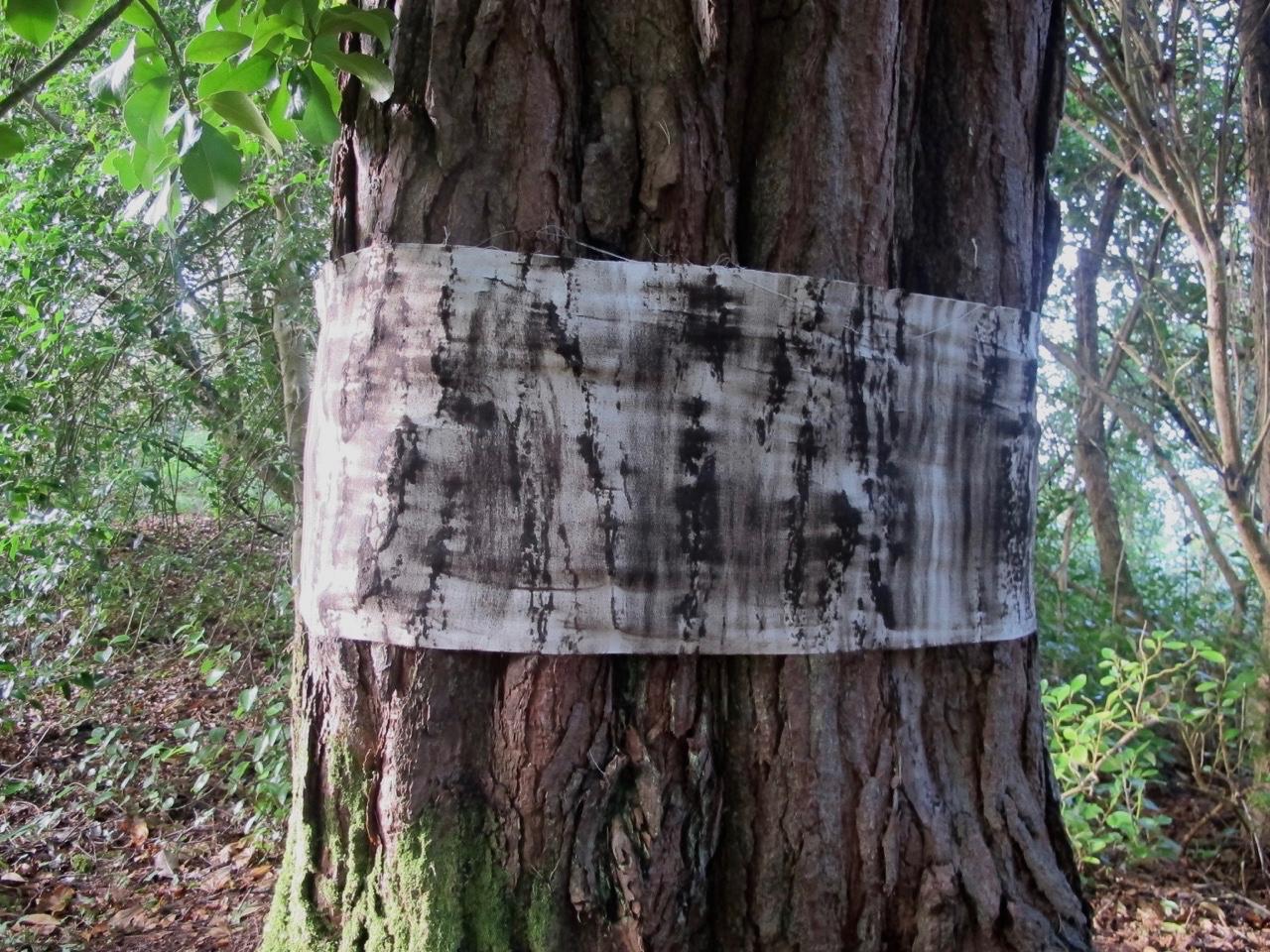 Scots Pine (pinus sylvestris) 2