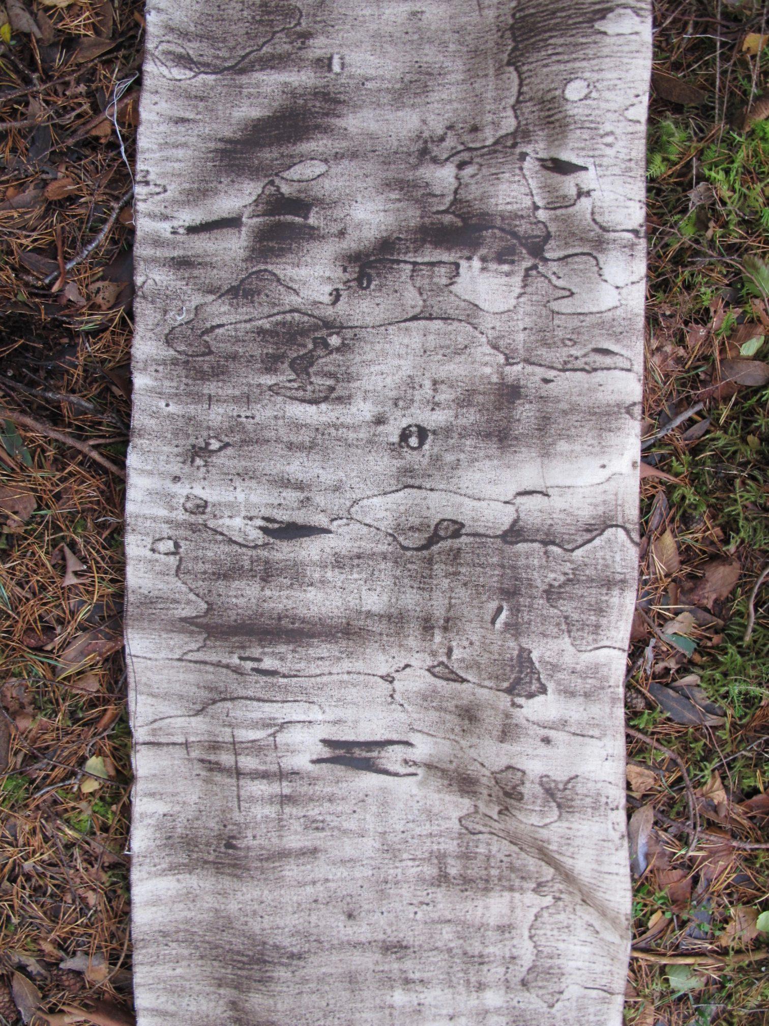 Eucalyptus subcrenulata 2