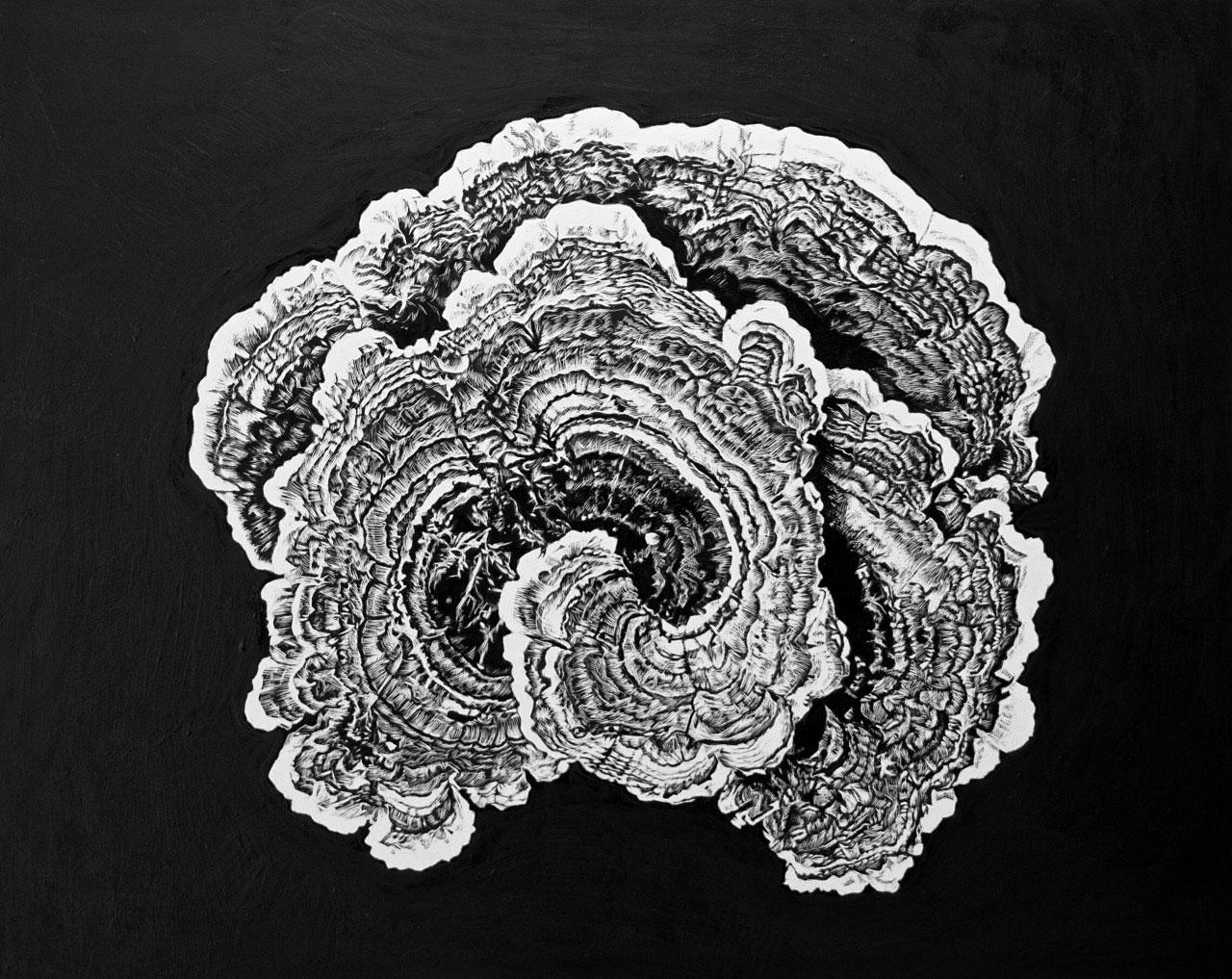 Turkey Tail Fungus - Horner Wood
